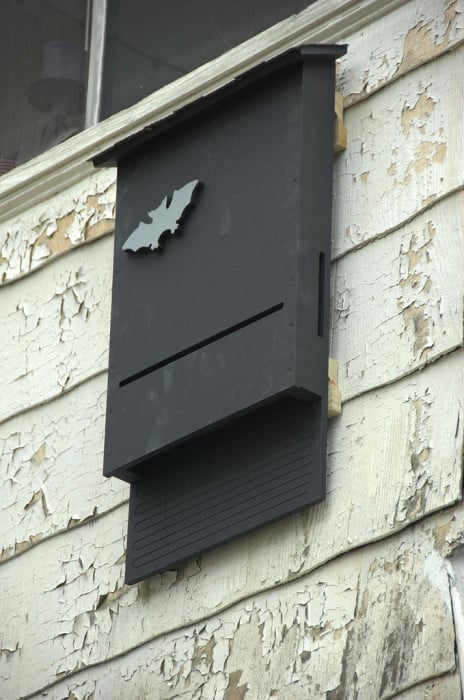 Bat House on Wall