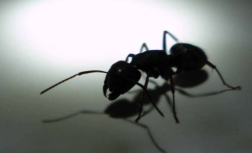 How to keep ants away from your house - Keep ants away in simple ways ...