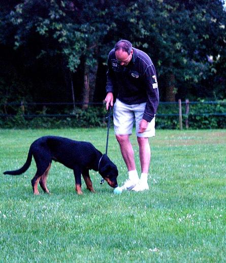 Man training dog outdoors